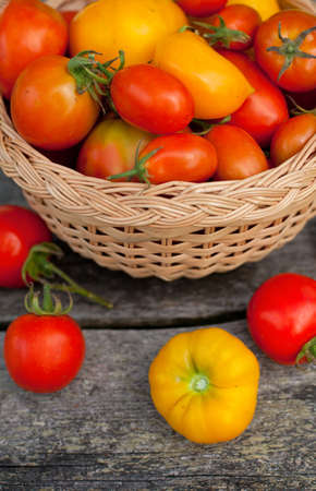 yellow and red tomatoes in a basket on garden table photo