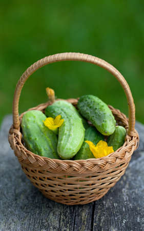 cucumbers in a basket on garden table photo