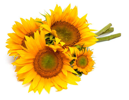 semillas de girasol: ramo de girasoles aislados sobre fondo blanco Foto de archivo