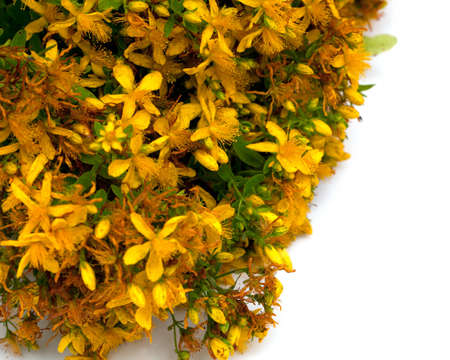 sedative: St. Johns wort on a white background