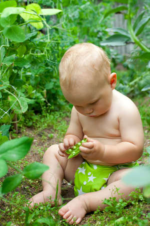 child eating green peas in the garden photo