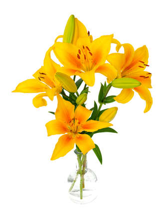 yellow lilies in glass vase isolated on white background Stock Photo - 15097218