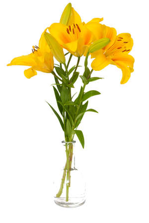 yellow lilies in glass vase isolated on white background Stock Photo - 15326326