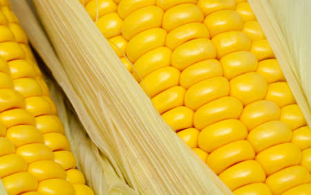 corn comb close up photo