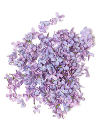 lilac flowers Stock Photo - 15393254