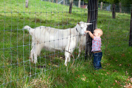 adorable child is cudling a goat through the fence photo