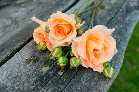 pink roses: beautiful roses on wooden table in the garden