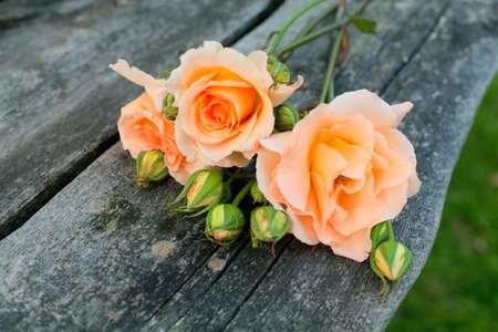 flor de durazno: hermosas rosas en la mesa de madera en el jard�n