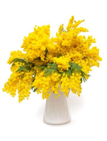 mimosa flower photo