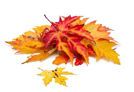 autumn leafs over white photo