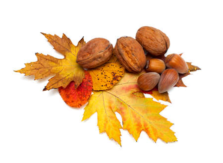 autumn leaves and nuts isolated on white photo