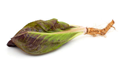 red and green chicory salads isolated on white background photo
