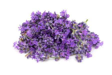 lavender flowers Stock Photo - 16086150