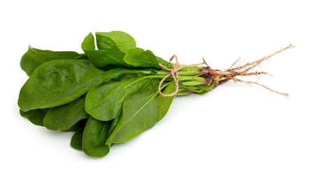 espinacas: espinacas frescas atado y aislado en el fondo blanco