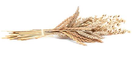 wheat and barley isolated on white background photo