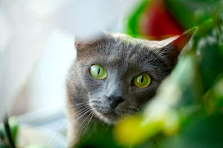 cat staring through green leafs photo