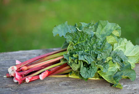 bunch of rhubarb on wooden garden table photo