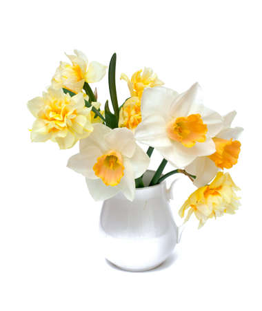 narcissus flowers in a pitcher over white photo
