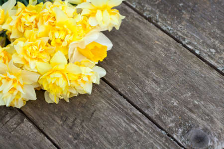 narcissus flowers on wooden background photo