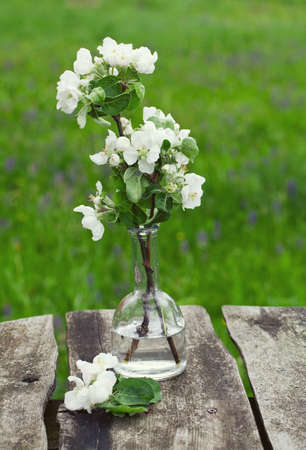 apple blossoms on rustic wooden garden table photo