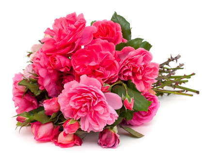 bouquet of pink roses on white background photo
