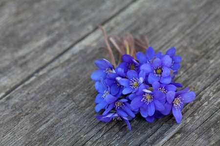 blue spring flowers on wooden table photo