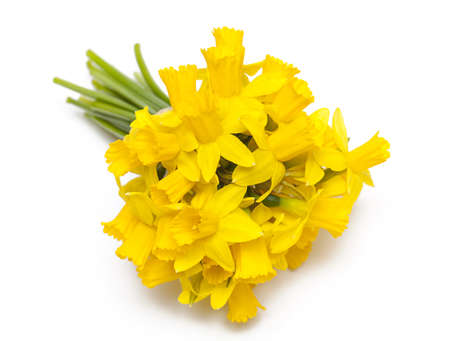 narcissus flowers isolated on white background photo
