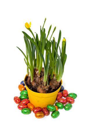 easter narcissus flowers and chocolate eggs photo
