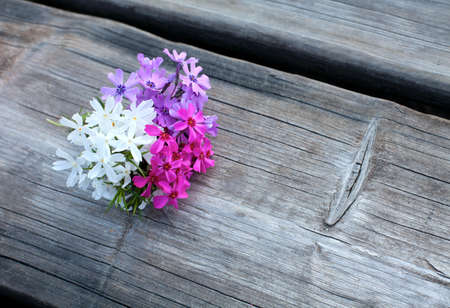 spring flowers on wooden surface photo