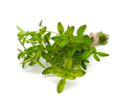 thyme isolated on white background photo