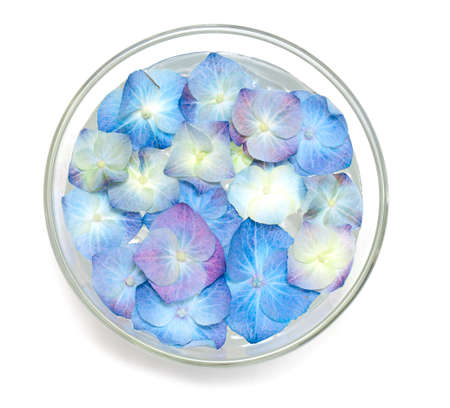 blue hydrangea flowers in a glass bowl fulled with water isolated on white photo