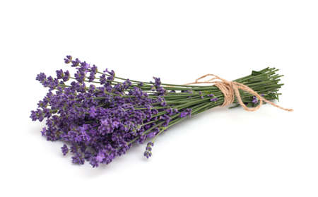 lavender isolated on white background Stock Photo