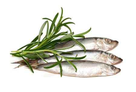 sprat fish and rosemary isolated on white background Stock Photo - 18902271
