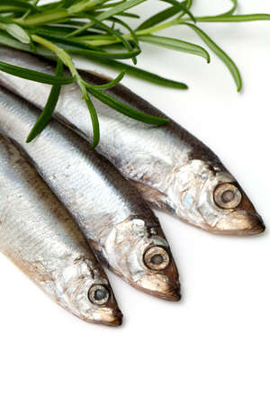 sprat fish and rosemary isolated on white background Stock Photo - 18904202