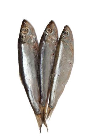 sprat fish isolated on white background Stock Photo - 19054872