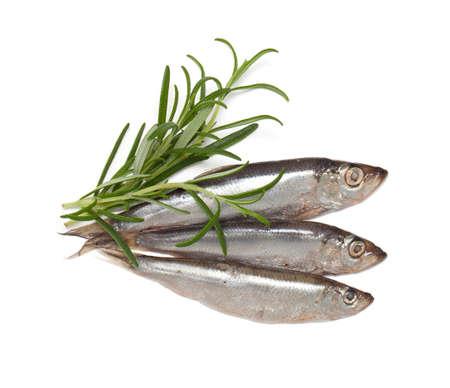 sprat: sprat fish and rosemary isolated on white background