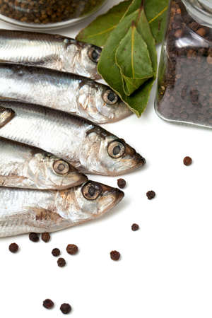 sprat fish in isolated on white background Stock Photo - 19396958