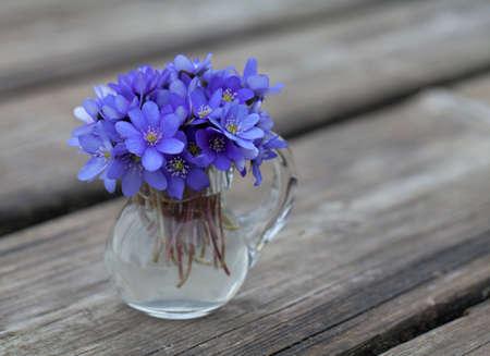 liverwort: liverwort flowers on wooden table