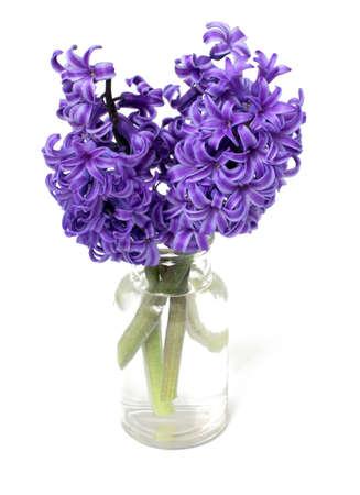 beyaz üzerinde şişede sümbül çiçek Stok Fotoğraf - 19398025