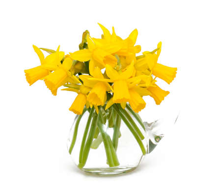 daffodil flowers isolated on white background photo