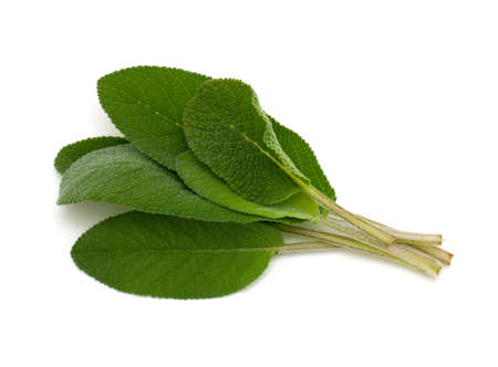 bunch of fresh sage isolated on white background Stock Photo