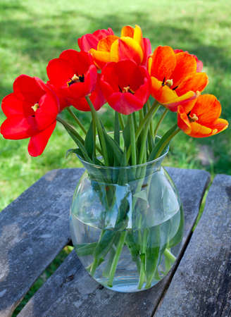 tulips in a glass vase on garden table photo