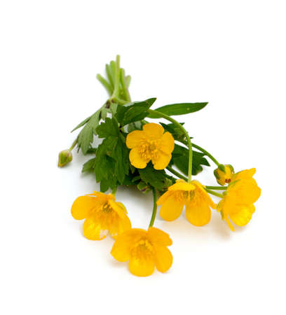 buttercups: yellow buttercups isolated on white backround