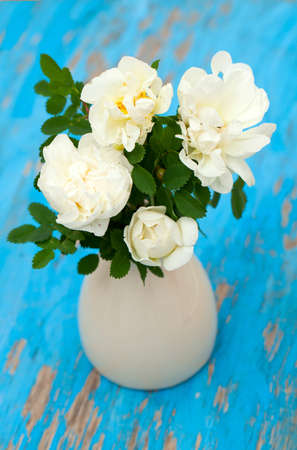 white roses in vase on blue wooden background photo