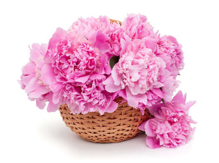 basket of peonies isolated on white background photo