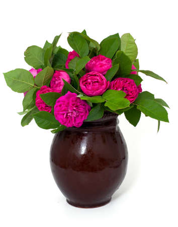 garden roses in a clay vase isolated on white background photo