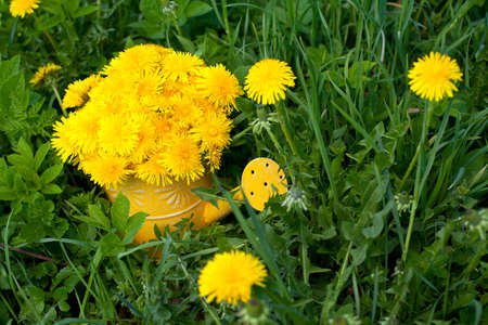 dandelions in a watering can standing on grass photo
