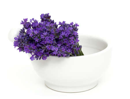 lavender in a mortar over white photo