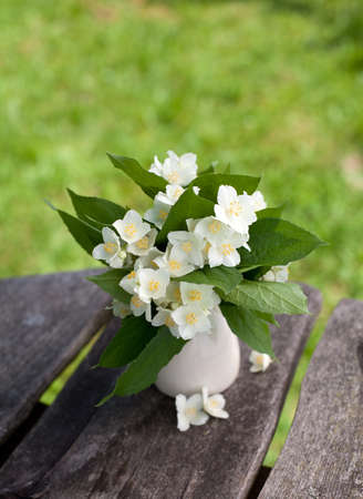 bunch of jasmine flowers on wooden garden table photo