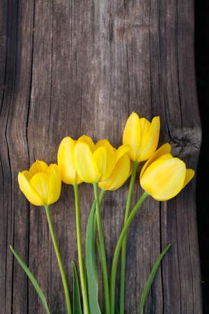 yellow tulips on wooden surface photo